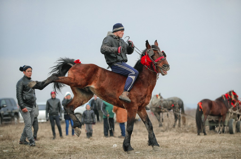 In this Sunday, Jan. 6, 2019, a man struggles to control his horse before an Epiphany celebration horse race in Pietrosani, Romania. The horse race tr