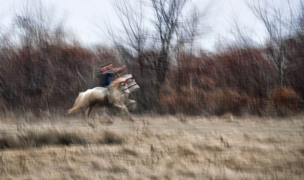 In this photograph taken with a slow shutter speed, on Sunday, Jan. 6, 2019 a man warms up his horse before an Epiphany celebration horse race in Piet