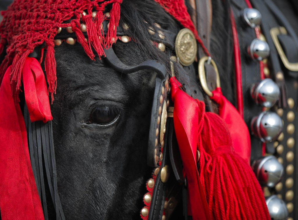 In this Sunday, Jan. 6, 2019, photograph a horse wearing colorful decorations waits before an Epiphany celebration horse race in Pietrosani, Romania.