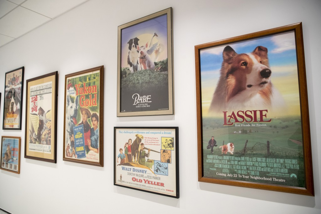 This Wednesday, Jan. 9, 2019, photo shows a wall of movie posters celebrating canine stars on display at the American Kennel Club Museum of the Dog in...