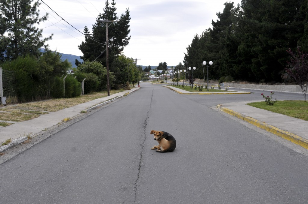 A dog sits on an empty street in Epuyen, Argentina, Friday, Jan. 11, 2019. An Argentine judge has ordered 85 residents of a remote Patagonian town to