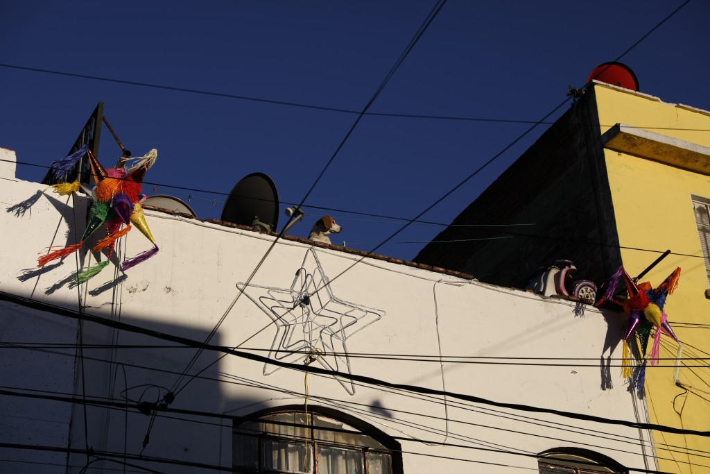 A dog peers down from the roof of a building decorated for Christmas, in the Roma Sur neighborhood of Mexico City, Wednesday, Dec. 19, 2018. News of A