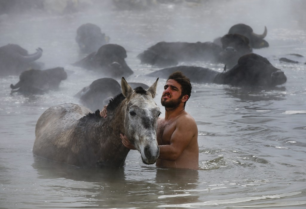 In this Thursday, Jan. 24, 2019 photo, Muhammed Toren, 18, washes his horse in a hot spring along with his water buffaloes near the village of Budakli