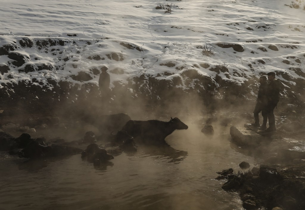 In this Thursday, Jan. 24, 2019 photo, water buffaloes bathe in a hot spring near the village of Budakli, in the mountainous Bitlis province of southe