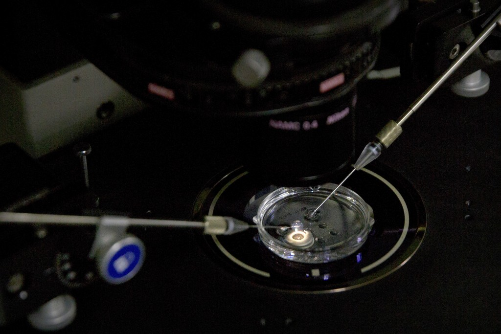 FILE - In this Oct. 9, 2018 file photo, an embryo receives a small dose of Cas9 protein and PCSK9 sgRNA in a sperm injection microscope in a laborator...