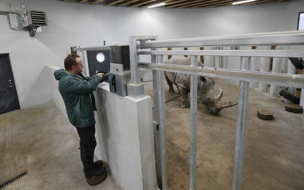 Anesthesiologists Frank Goeritz shoots a tranquilizing dart to sedate female southern white rhino, 17-year-old Hope, so team of experts can harvest it...