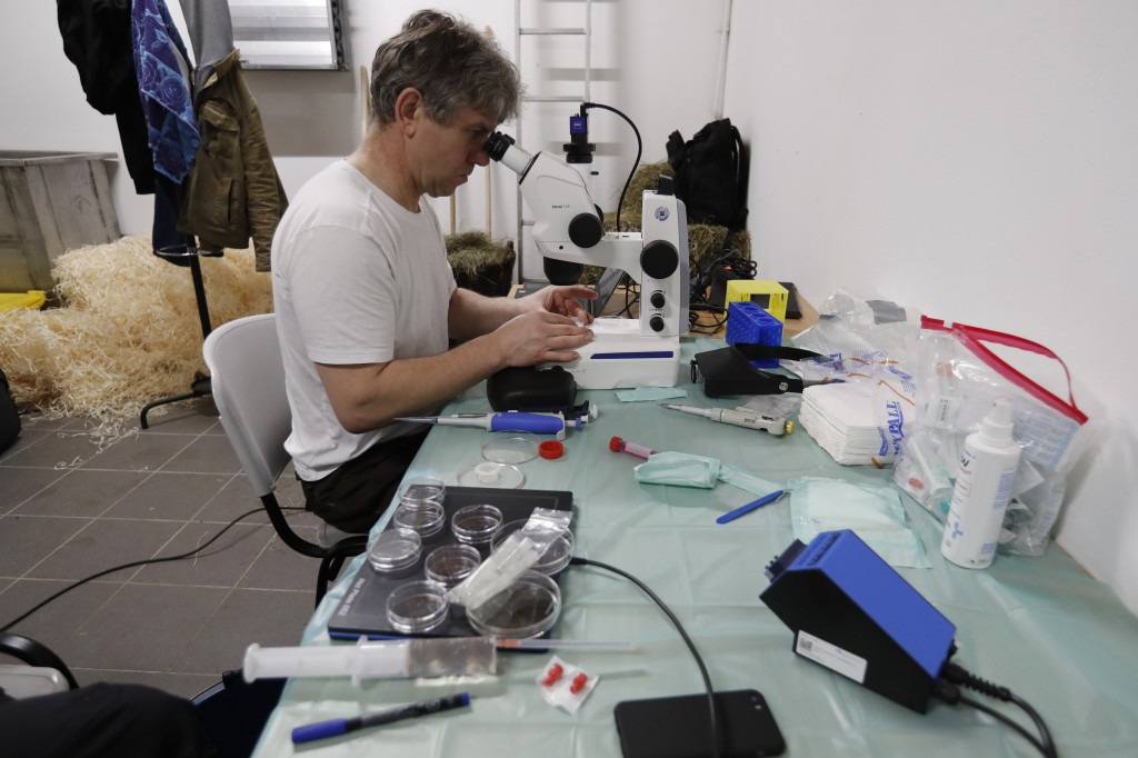 Thomas Hildebrandt of the Leibniz Institute for Zoo and Wildlife Research in Berlin examines samples after harvesting eggs from female southern white ...