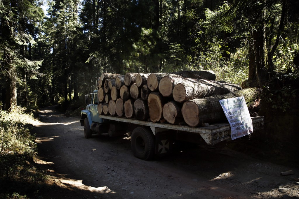 A truck carrying lumber drives on a logging track near the Amanalco de Becerra Sanctuary, in the mountains near the extinct Nevado de Toluca volcano, ...