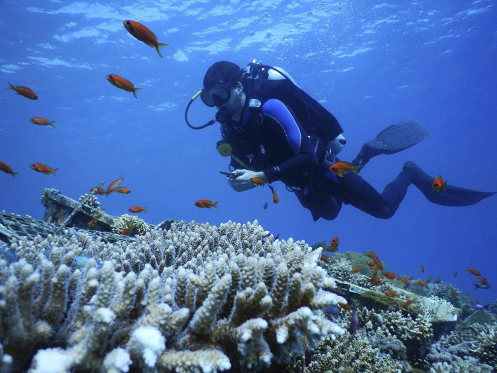 This Thursday, Jan. 17, 2019 photo, provided by the Interuniversity Institute for Marine Sciences, IUI, shows corals at the institute's coral farm in ...