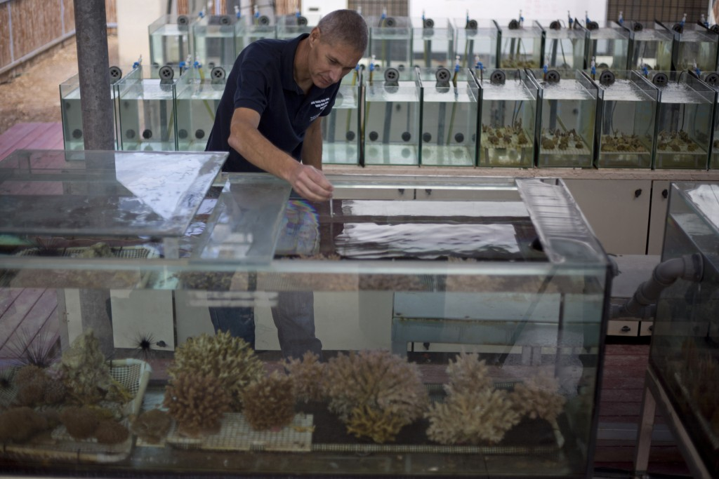 In this Monday, Feb. 11, 2019 photo, Maoz Fine, an expert on coral reefs at Bar-Ilan University, measures the water temperature of tanks treated to si...