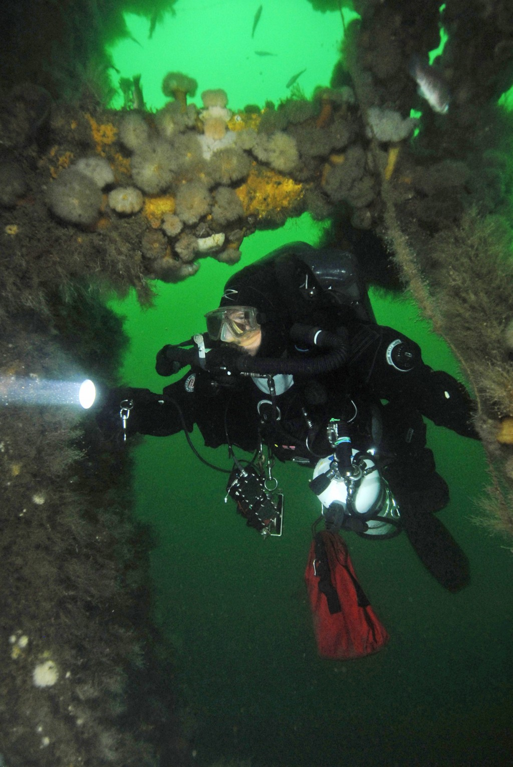 This 2017 photo provided by Tom McCarthy shows a diver exploring the wreck of the SS Oregon off the coast of Long Island in New York. An ale introduce