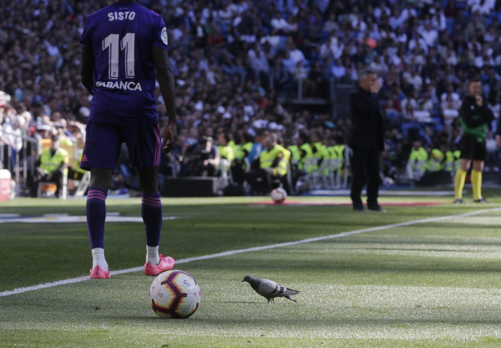 A pigeon walks on the pitch during a Spanish La Liga soccer match between Real Madrid and Celta at the Santiago Bernabeu stadium in Madrid, Spain, Sat