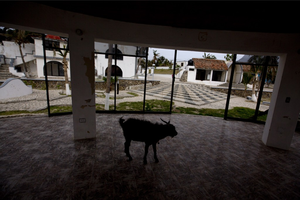 A goat wanders inside the shell of a building that was damaged in a 2018 hurricane in then staff area of Puerto Balleto during a media tour of the for