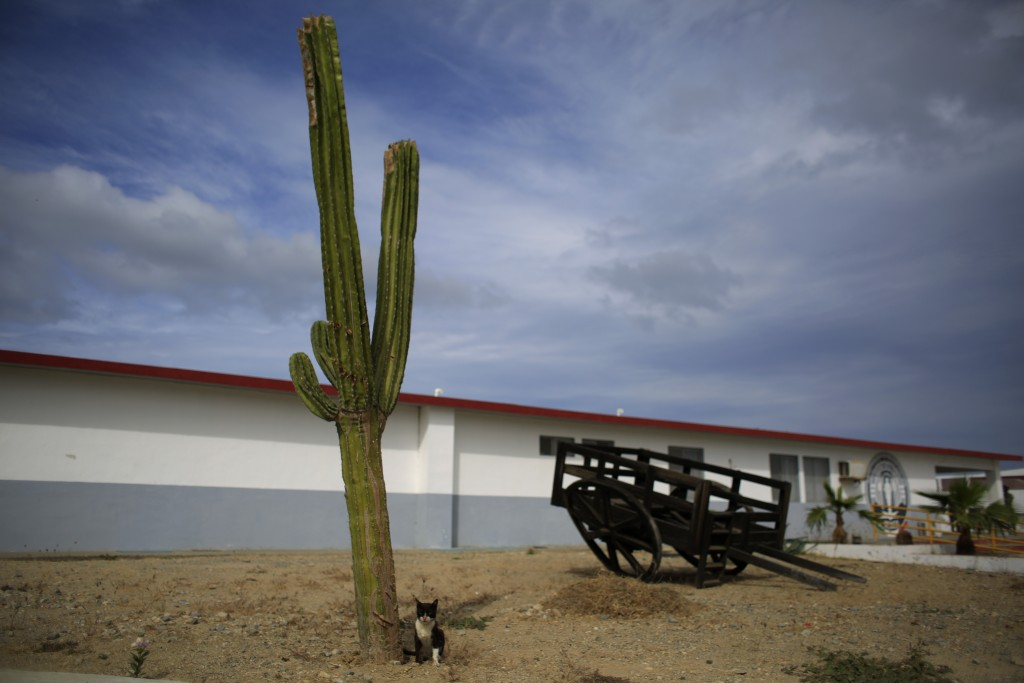 A cat sits by a cactus at the now closed Laguna del Toro maximum security facility during a media tour of the former Islas Marias penal colony located