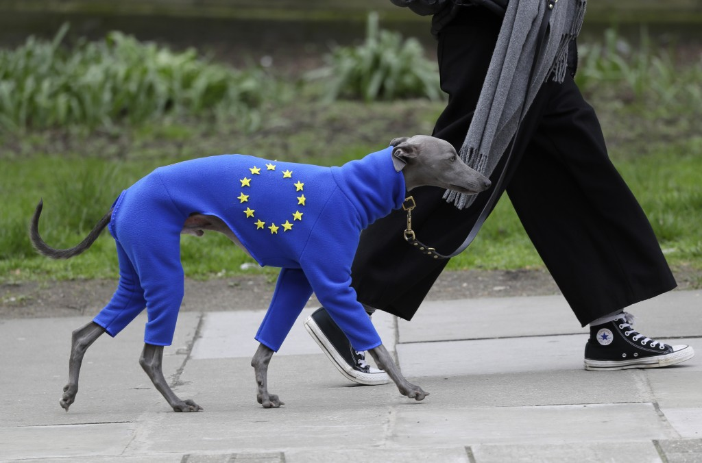 A demonstrator leads a dog wearing a suit in the EU colors during a Peoples Vote anti-Brexit march in London, Saturday, March 23, 2019. The march, org
