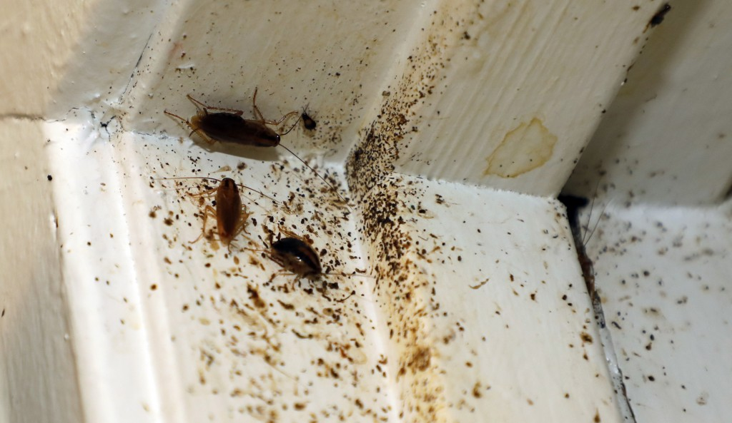 In this Feb. 20, 2019 photo, roaches line the door jam of Destiny Johnson's apartment in Cedarhurst Homes, a federally subsidized, low-income apartmen...