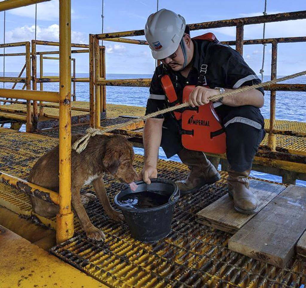 In this Friday, April 12, 2019, photo, a dog is taken care by an oil rig crew after being rescued in the Gulf of Thailand. The dog found swimming more