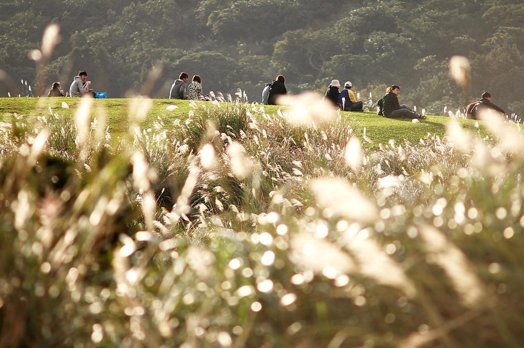 11月正值陽明山芒草季,21日陽明山擎天崗天氣晴朗,民眾在綠地上席地而坐賞芒草。中央社記者吳家昇攝                100年