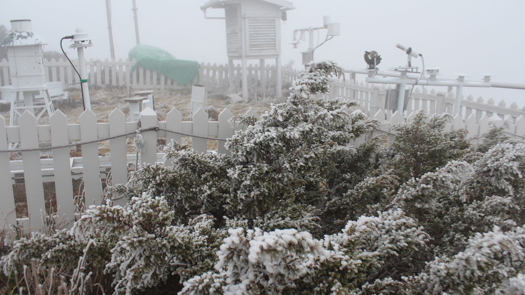 冷氣團報到,玉山2日氣溫降到冰點之下,北峰玉山氣象站觀測坪上的植物,附著白色不透明的堆積冰層,形成「霧淞」景觀。(玉山氣象站提供)中央社記...