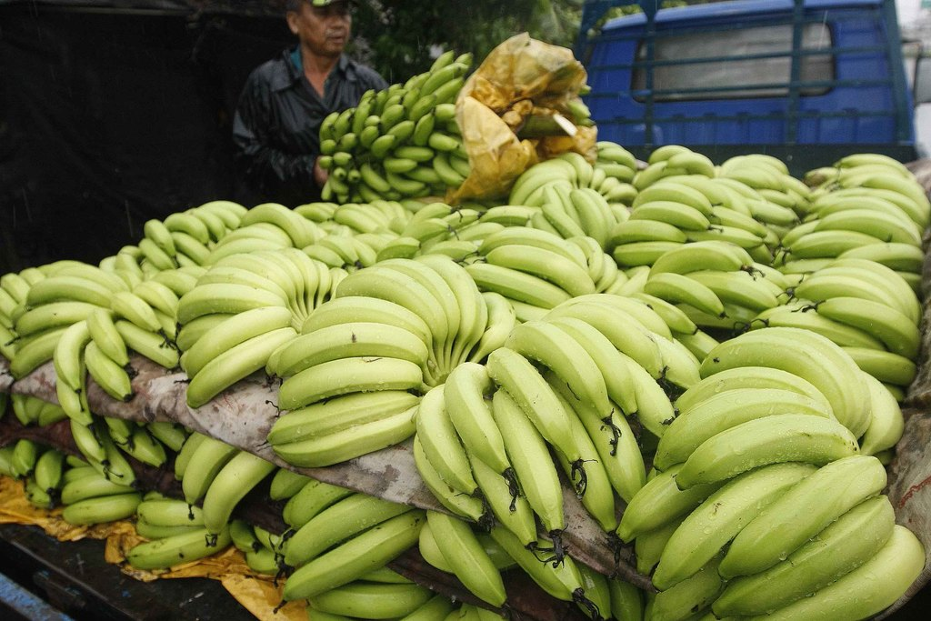 DGBAS chief says that consumers shouldn't buy bananas if prices are too high
