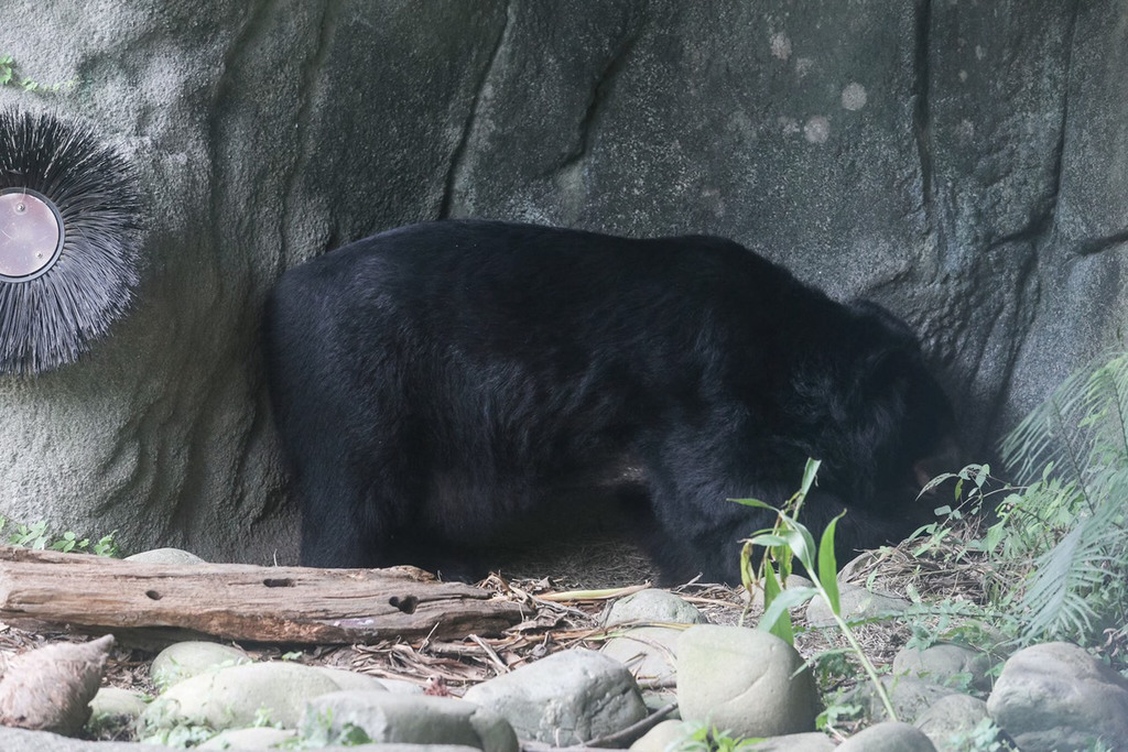 Bear mauls staff member at Taipei Zoo