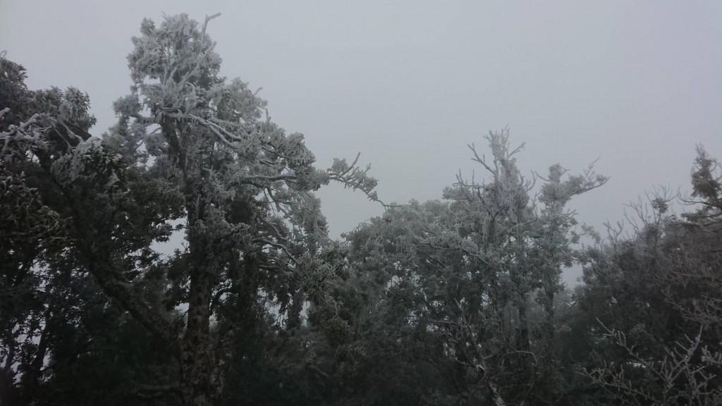 寒流3日籠罩全台,宜蘭縣太平山清晨降下今年第三波 瑞雪。 (賴俊仁提供) 中央社記者王朝鈺傳真 107年2月3日