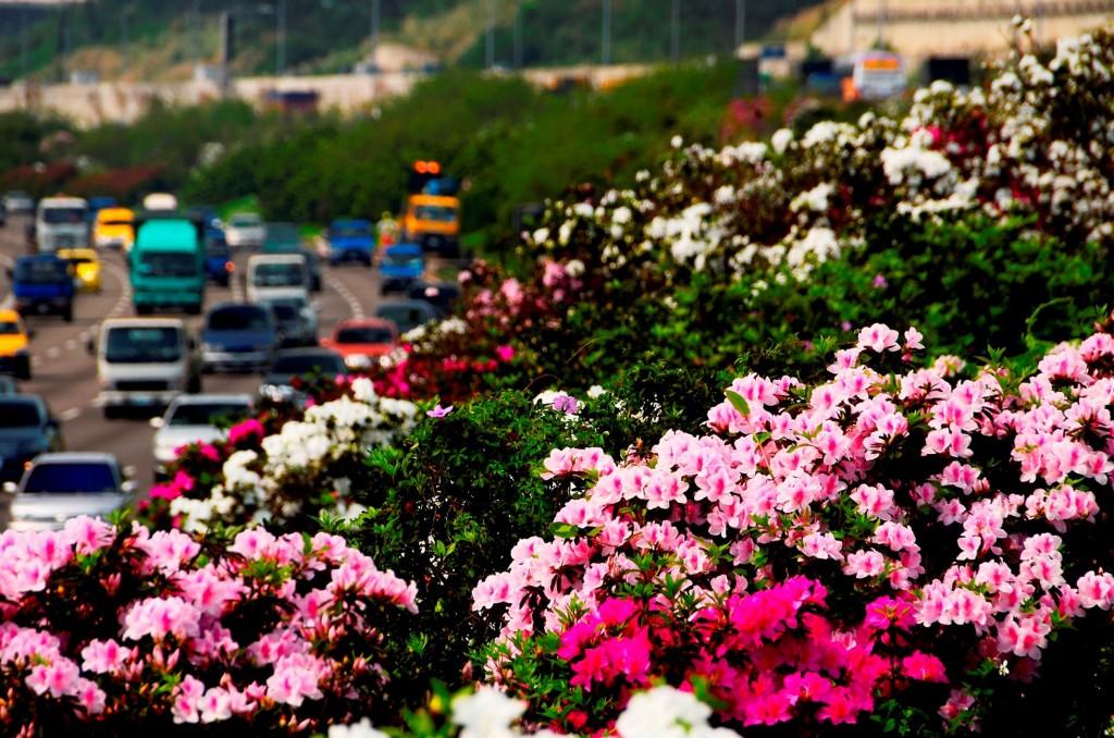 台灣進入春暖花開時節,國道花季也來臨,增添繽紛色 彩。 (高公局提供) 中央社記者汪淑芬傳真 107年2月28日