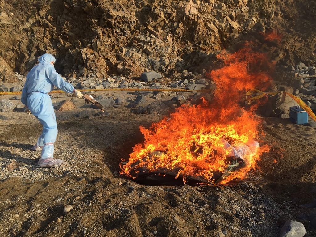A hog carcass on an uninhabited island near Matsu tested positive for African swine fever.