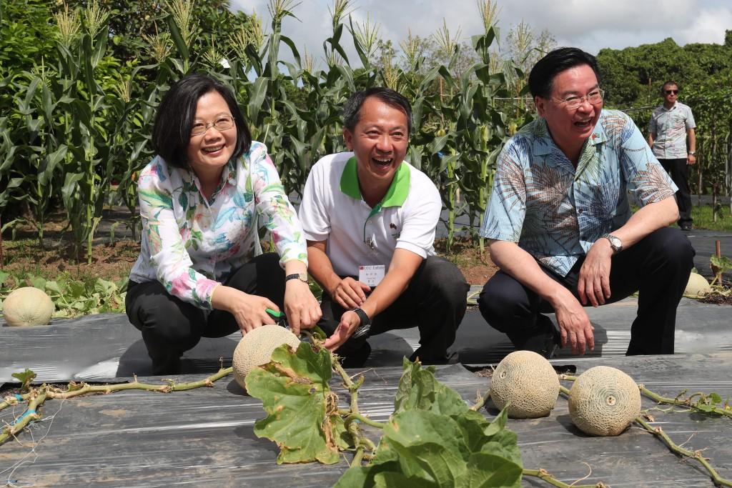 蔡總統訪駐帛琉農業技術團,採收哈密瓜