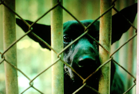 China's dog meat supply - stolen, stray and poisoned