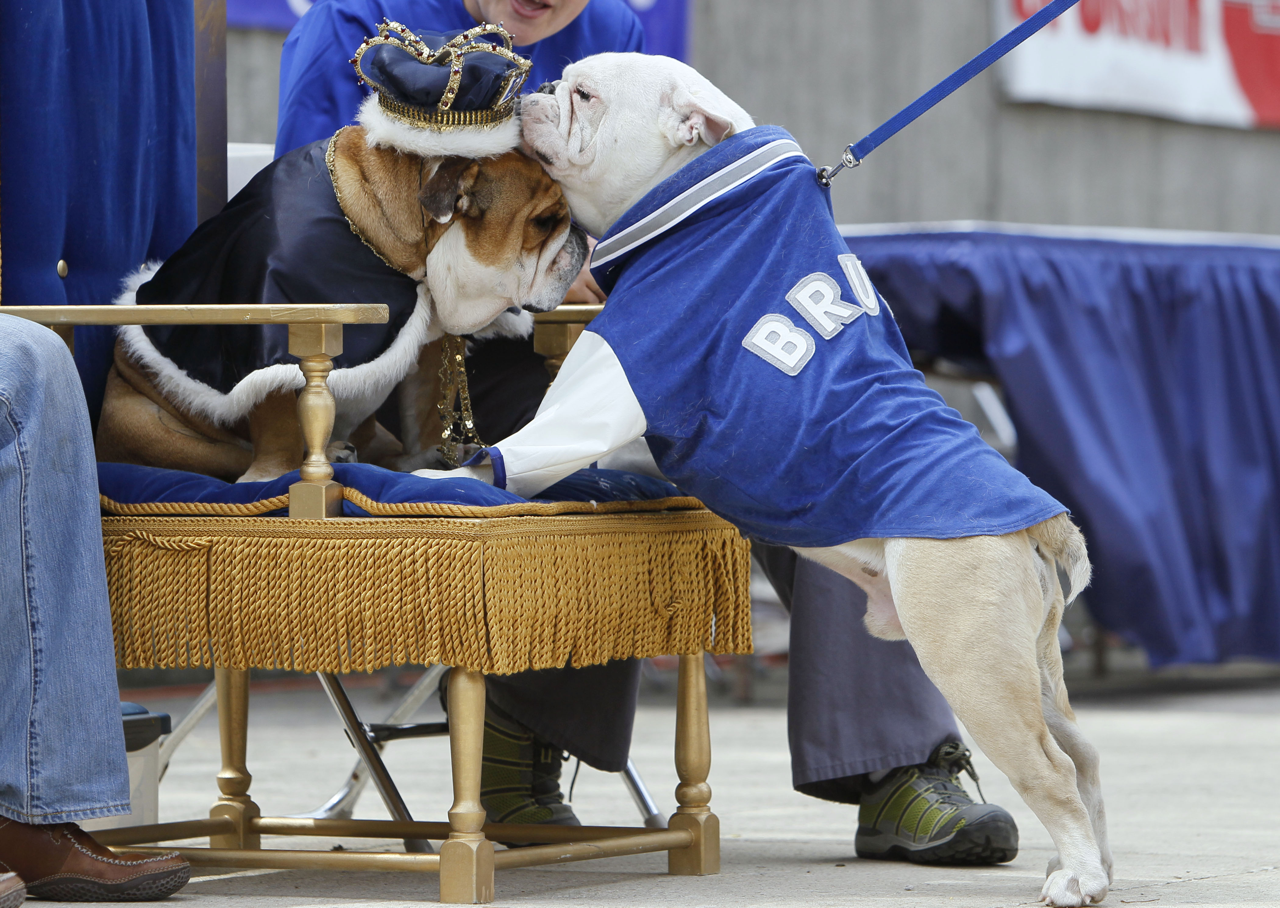 Bruce, right, owned by Colleen Kelley, of Iowa City, checks out last year's winner Porterhouse, left, while walking across stage during the contest in...