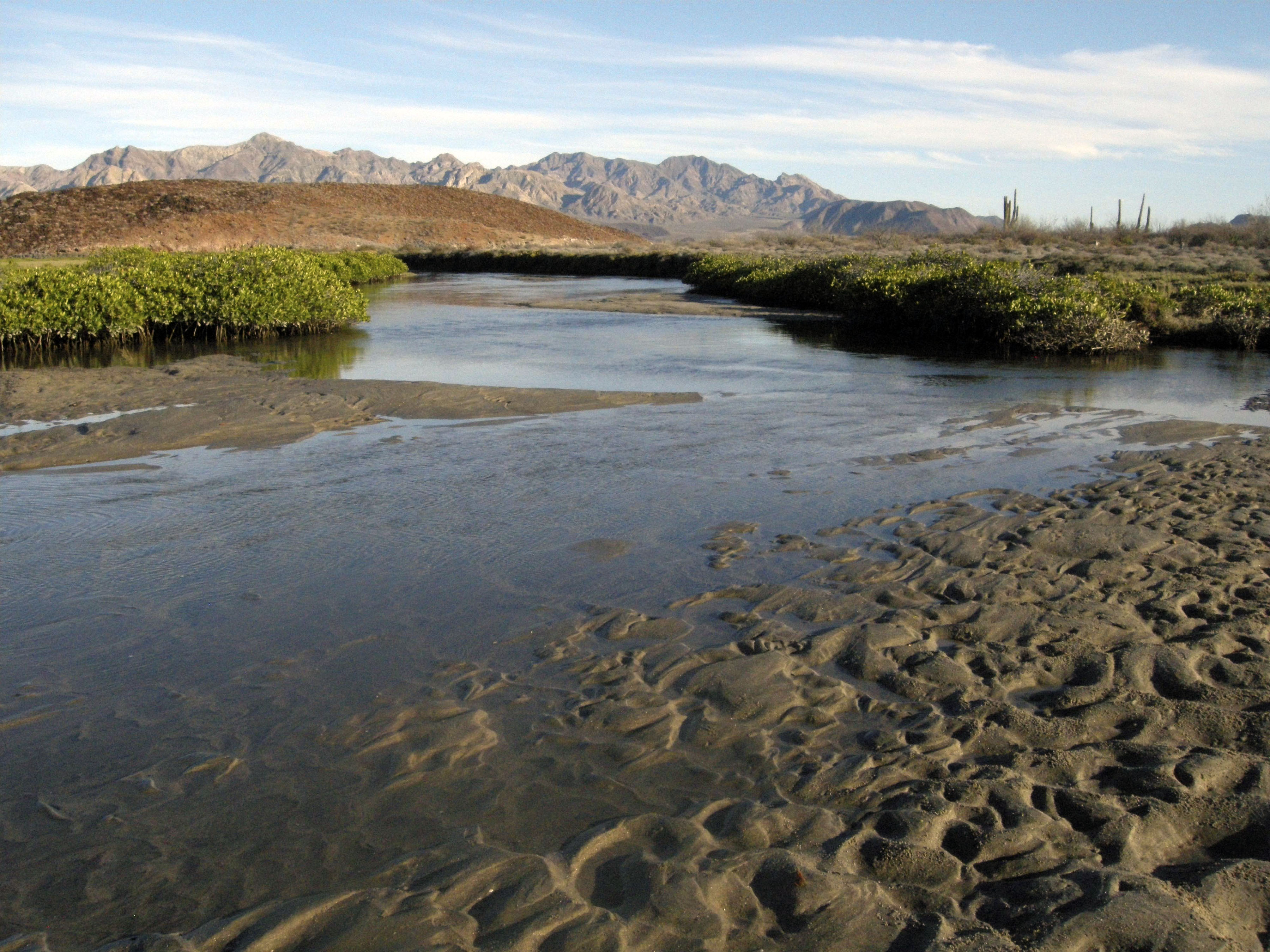 A mangrove estuary not far from the Las Animas Wilderness Lodge south of Bahia de los Angeles in Baja California, Mexico is shown in this October 2009...