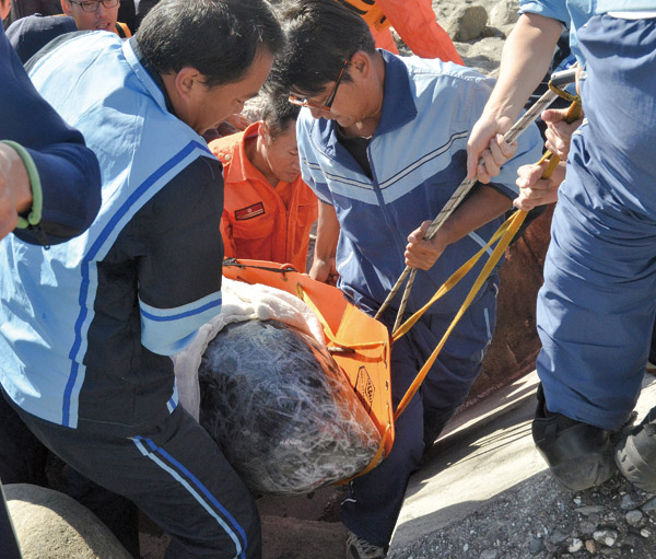 Photo shows the one that was found alive by fishermen was beached at Fengli in Taitung on Jan. 8. (Central News Agency)