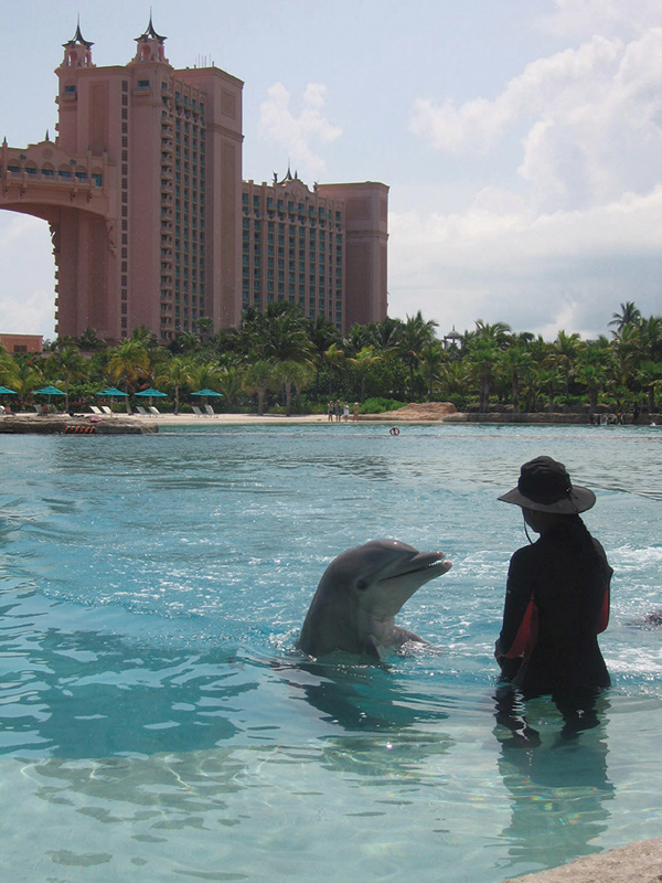 A dolphin and trainer work in a pool at the Atlantis Paradise Island Resort in the Bahamas. (Minneapolis Star Tribune)