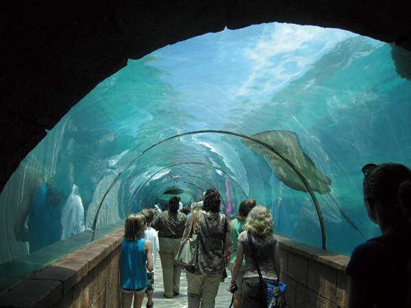 Visitors stroll through a tank of rays and other marine life at the Atlantis Paradise Island Resort in the Bahamas. (Minneapolis Star Tribune)
