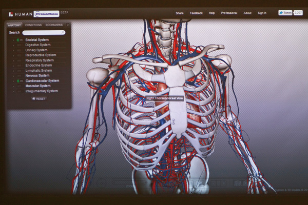 A projection of a 3-D computer model of a human body during an anatomy class at the New York University School of Medicine in New York, Dec. 19, 2011....