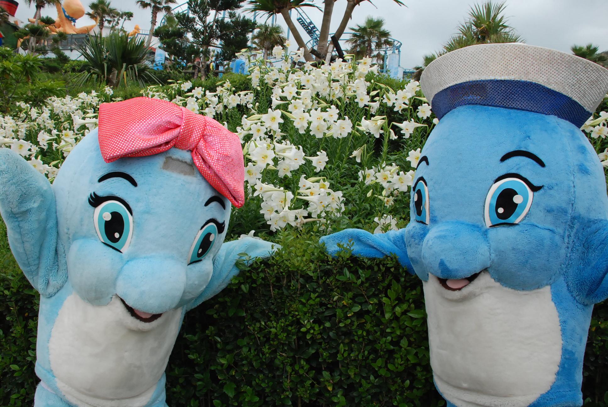 獨賣 海豚熱吻 + 浪漫百合花海 一起九九雙人套票 給您幸福海洋的承諾