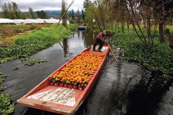 A marigold vendor transports his wares by boat on a canal in Lake Xochimilco in Mexico City.