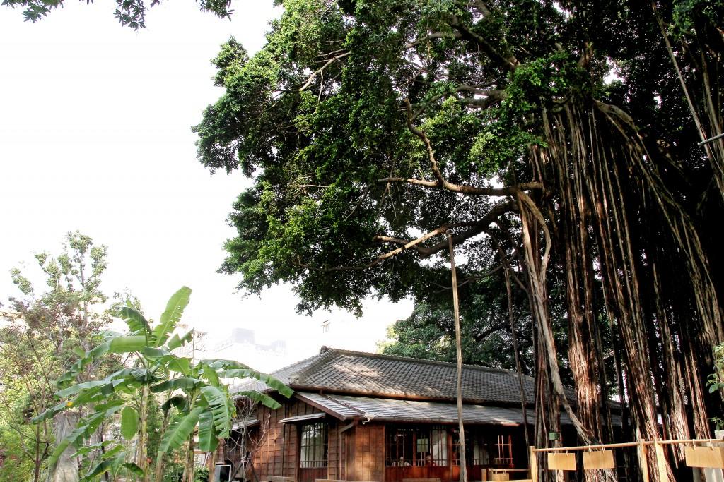 老榕樹壯觀的氣根廊穴道出台中文學館建物的悠久歷史。