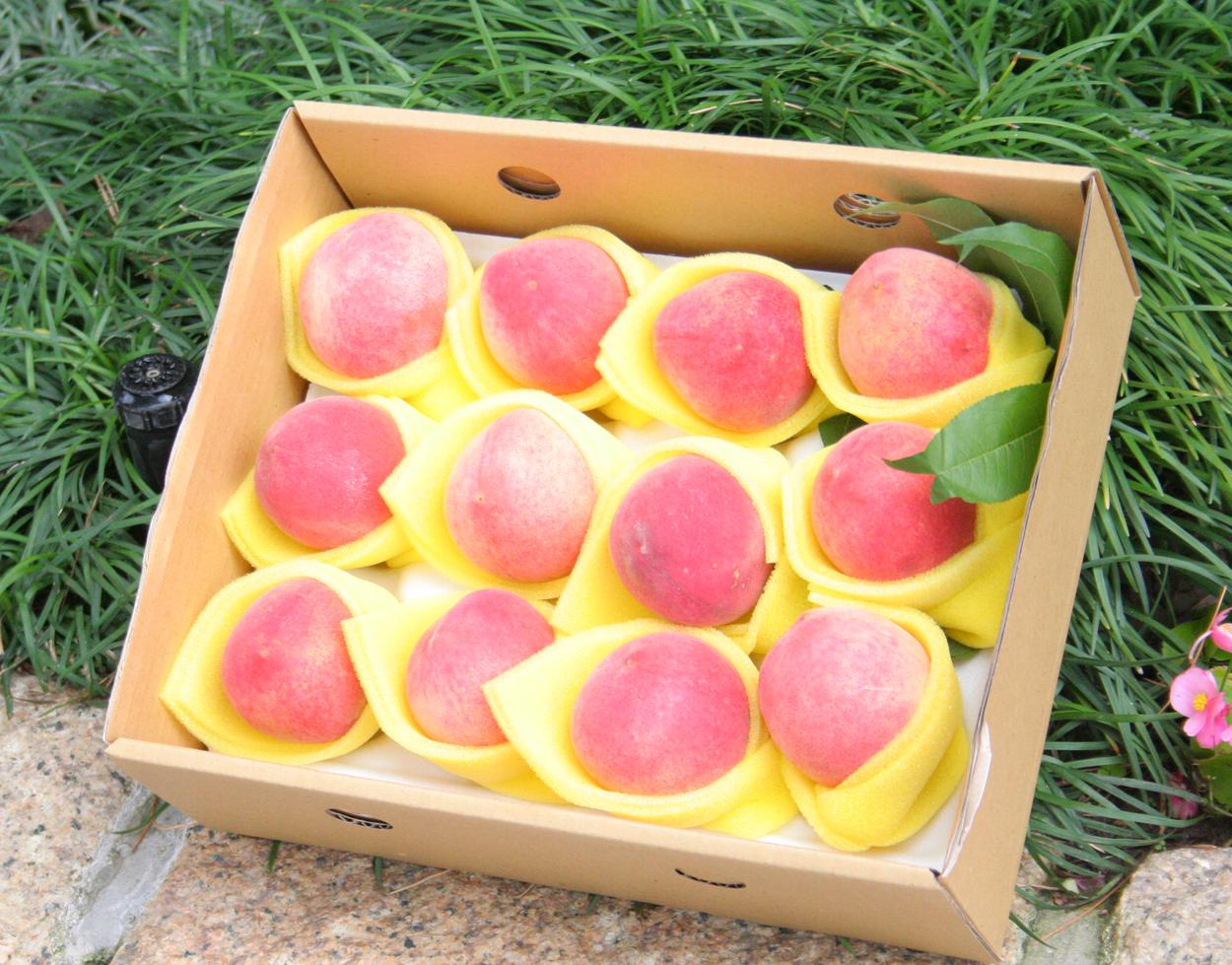 五月桃禮盒