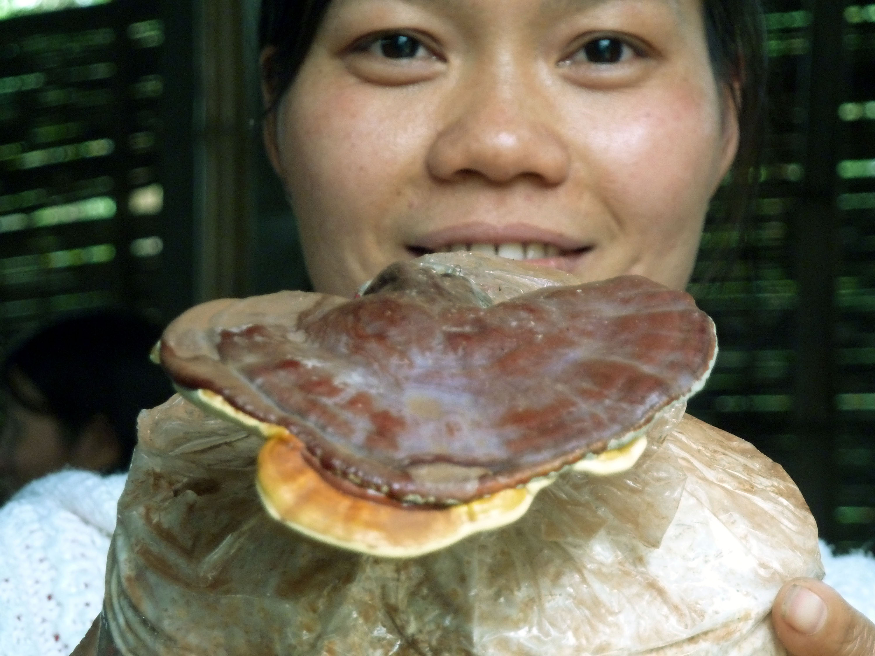 Taiwanese researchers find obesity-reducing properties in fungus
