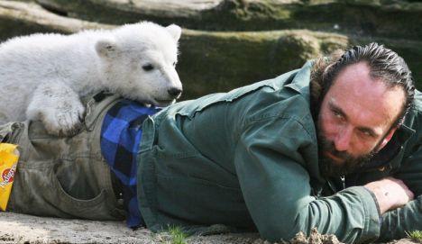 """柏林動物園爆紅的小北極熊""""克努特""""(Knut)3/19日猝死,而照顧它的44歲保育員德夫萊茵2008/09/23日也是被發現神秘死在公寓內..."""