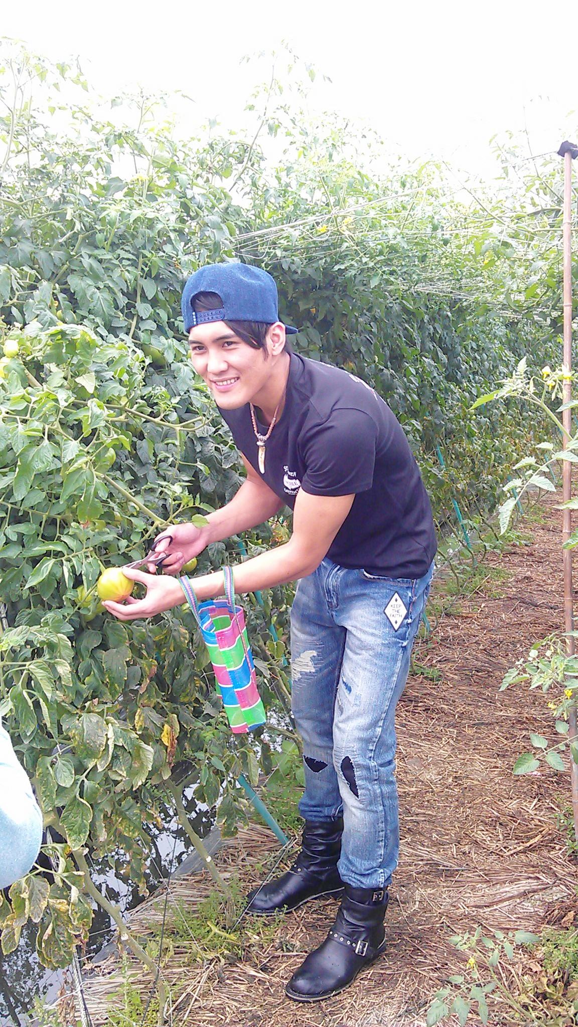 礁溪老爺春季專案帶旅人品嘗現摘溫泉番茄.