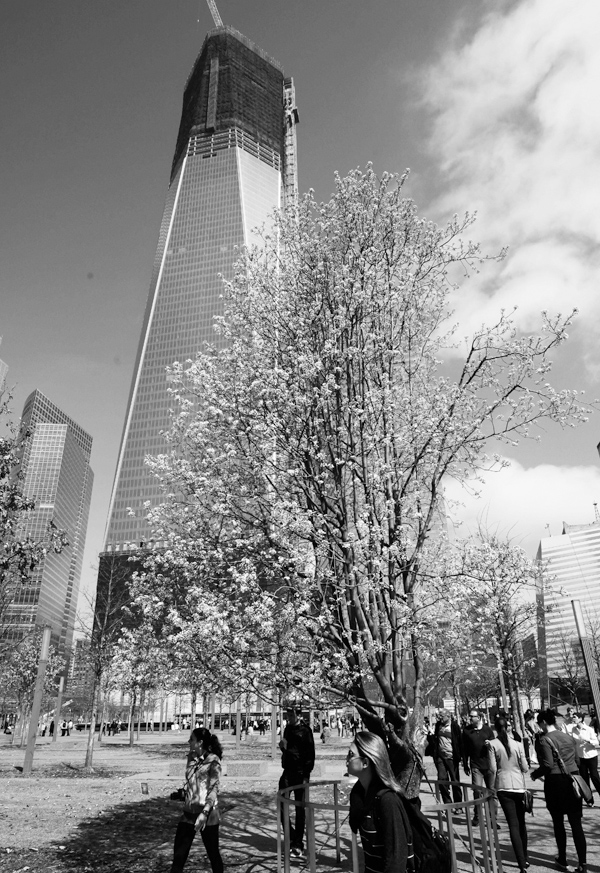 Visitors to the national September 11 Memorial pass the Survivor Tree, Tuesday, March 20, 2012 at the World Trade Center in New York. One World Trade ...