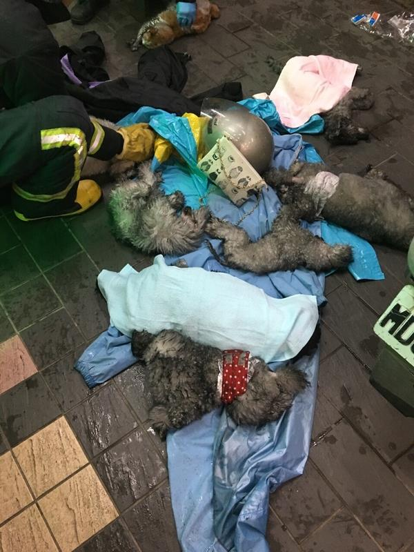 Fire at Taipei SPCA kills more than a dozen cats, sparks speculations