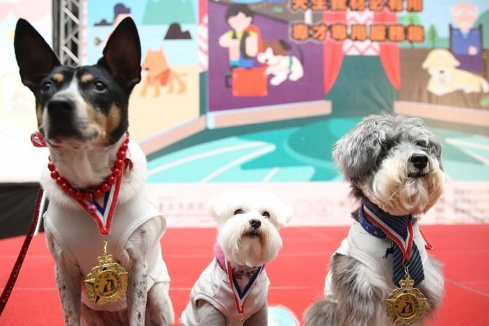 Taipei City to turn strays into public service dogs