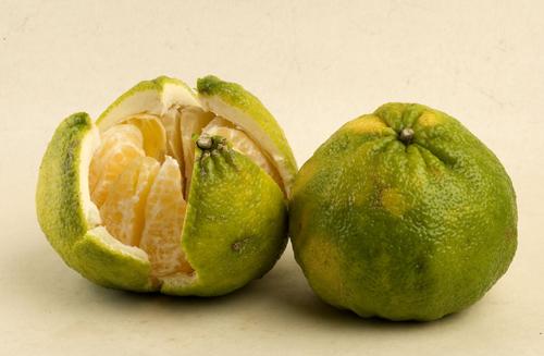 Meet the ecotic citrus varieties that can perk up wintertime meals:ugli fruit.