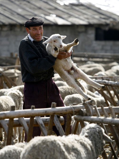 A shepherd holds a lamb at a sheepfold some 35 kilometers east of Bucharest on February 13. Romanian shepherds are pondering new food safety standards...