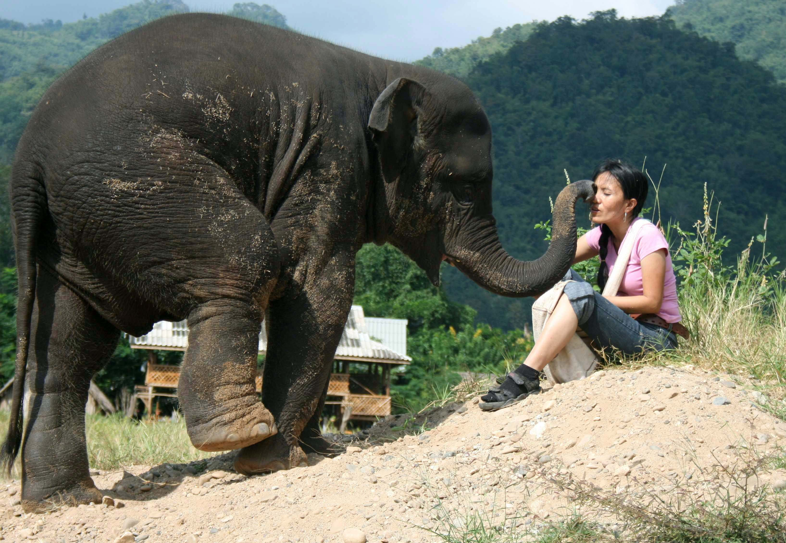 "Sangduen ""Lek"" Chailert plays with ex-working elephants at her rescue centre for domesticated elephants in Chiang Mai, northern Thailand in this Novem..."