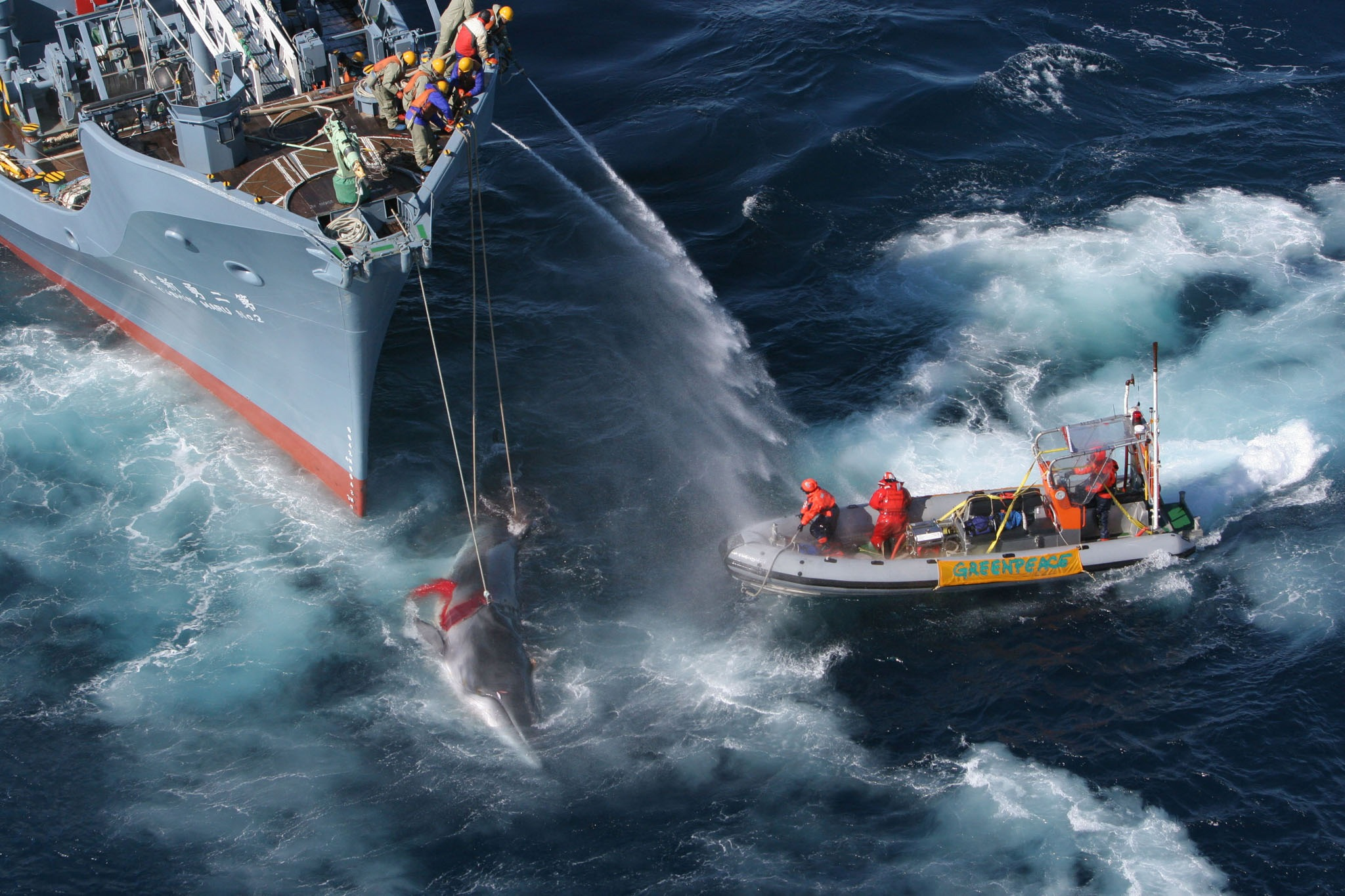 Greenpeace ship My Esperanza tries to hinder the shooting of a minke whale by the Yushin Maru No. 2 ship in the southern ocean in this handout photo d...